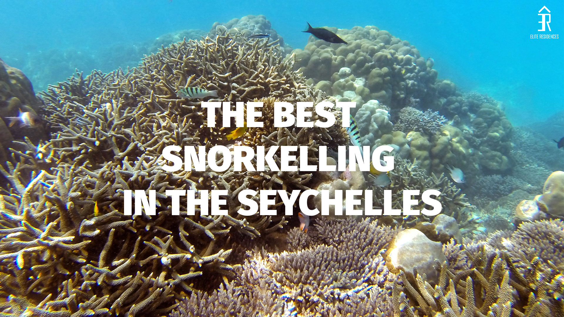 Top Snorkelling Locations